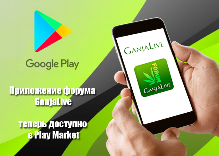 ganjalive-forum-app-is-now-in-the-google-play-store